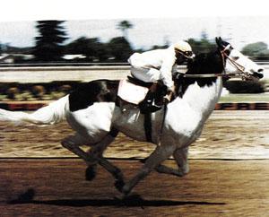 History of gambling on horses boxwood casino